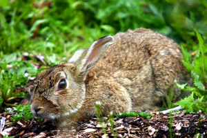 Okay, so a different kind of rabbit but how cute is the bunny?!!
