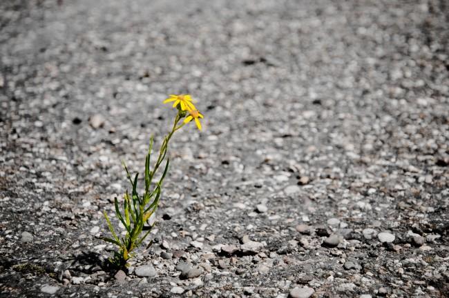 stockvault-lonely-flower133148